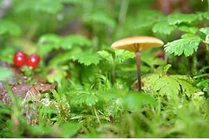 Dewy Mushroom